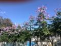 遠目には桜が咲いているかに見えたもの