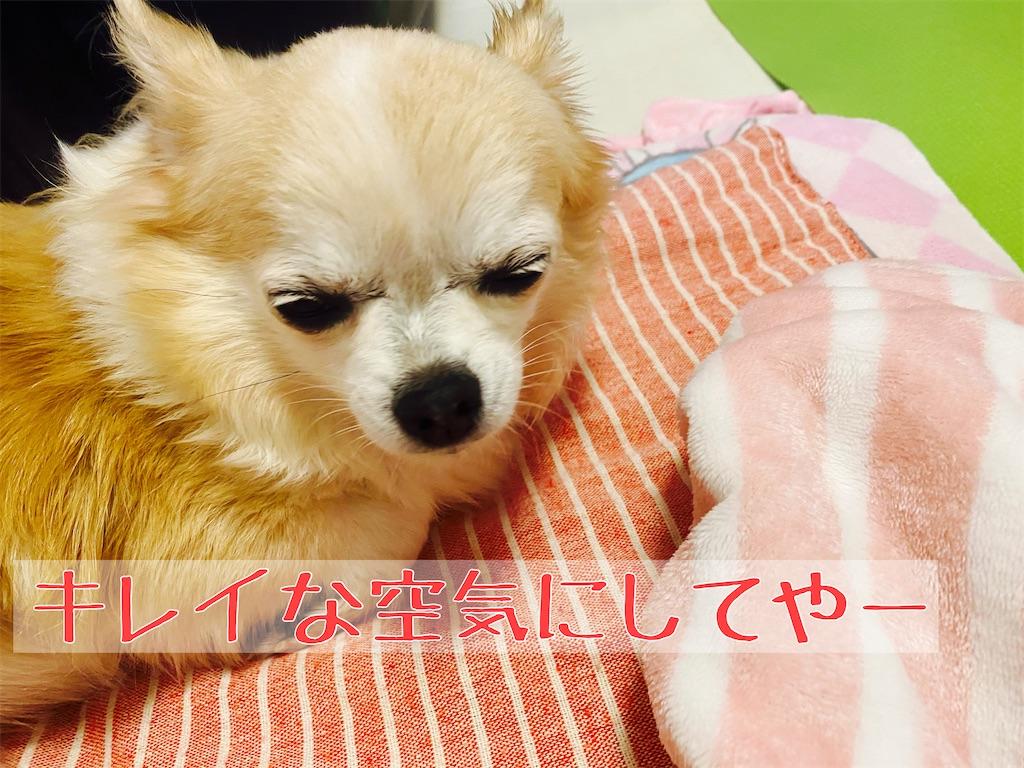 f:id:KizunaKiraKira:20201112101555j:image