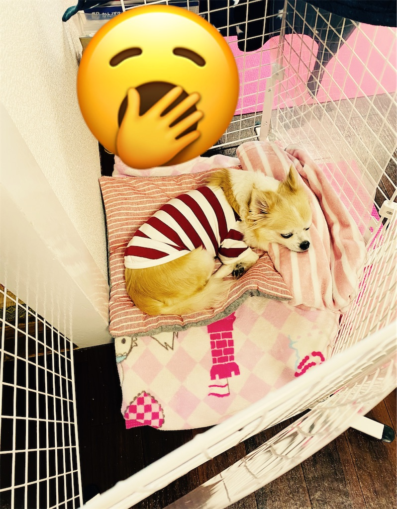 f:id:KizunaKiraKira:20201112101854j:image