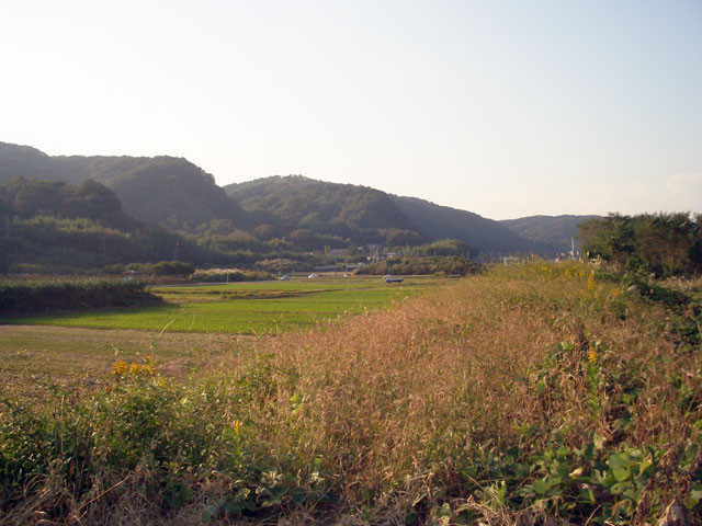 愛川町付近の水田
