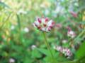 [picture]水辺に咲く花