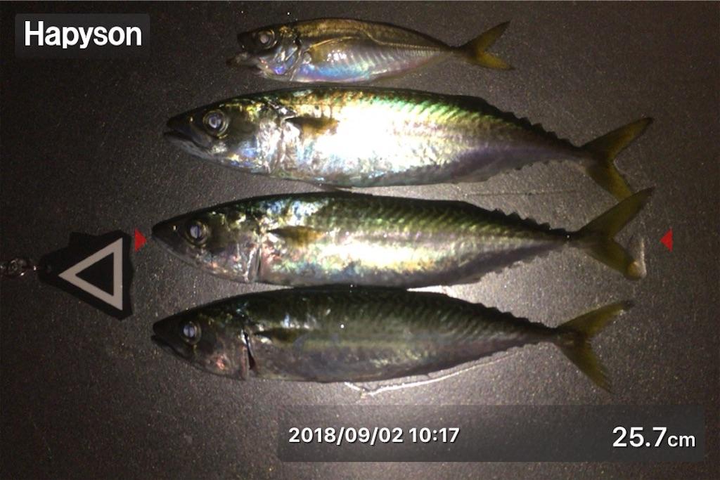 f:id:Kobe_Angler:20180902144707j:image