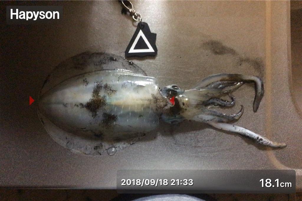 f:id:Kobe_Angler:20180920001538j:image