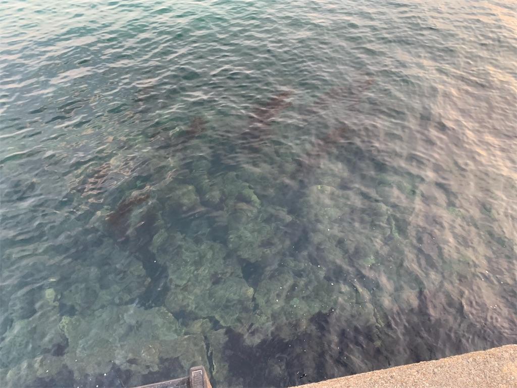 f:id:Kobe_Angler:20190211143452j:image