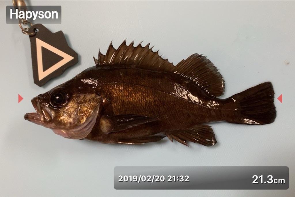 f:id:Kobe_Angler:20190221233940j:image