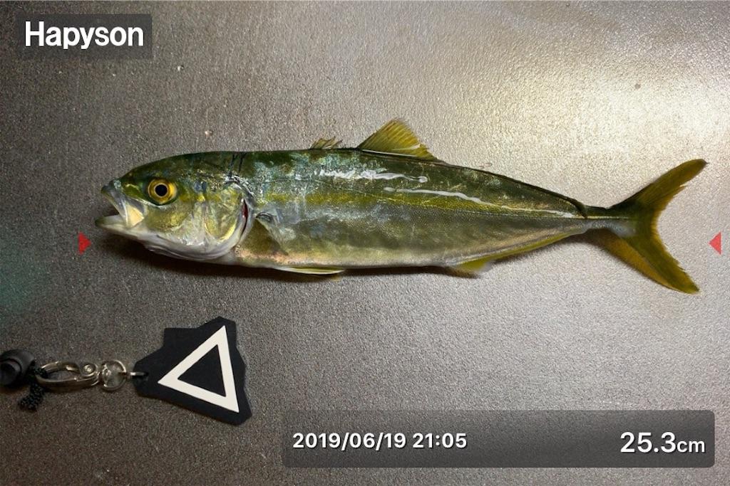 f:id:Kobe_Angler:20190621213013j:image