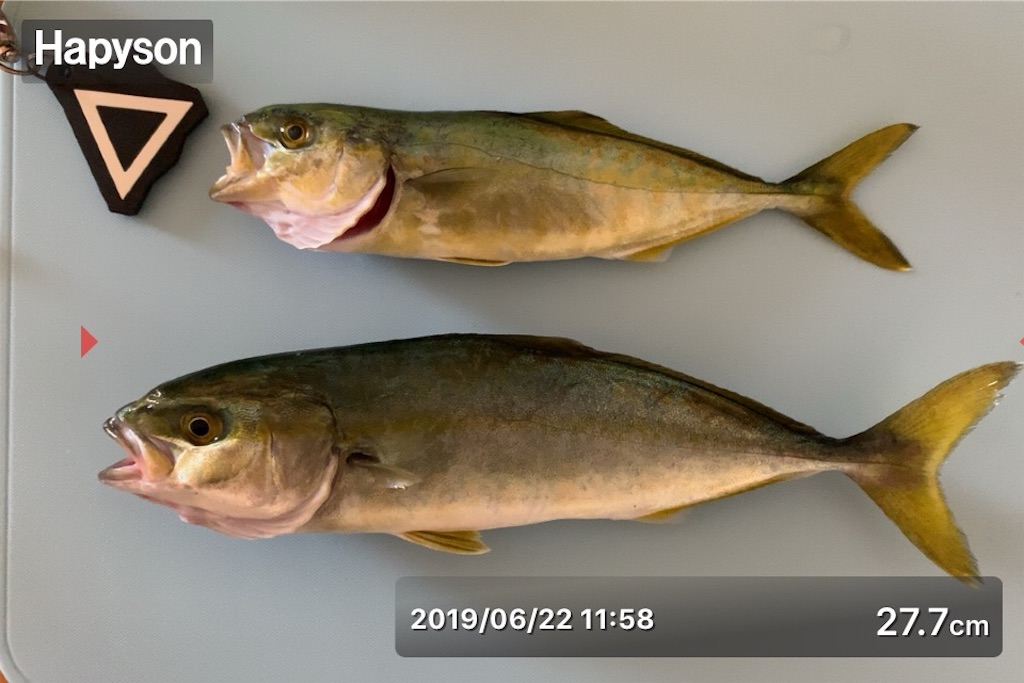 f:id:Kobe_Angler:20190623124223j:image
