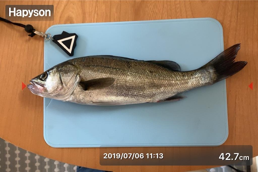 f:id:Kobe_Angler:20190707131517j:image
