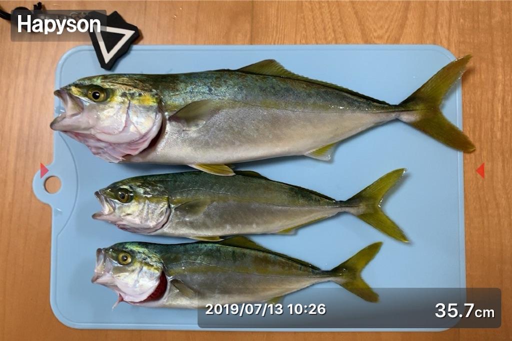f:id:Kobe_Angler:20190715200643j:image