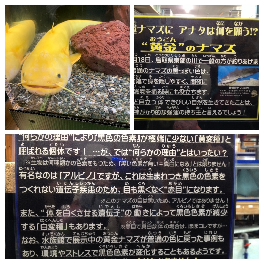 f:id:Kobe_Angler:20190811124716j:plain