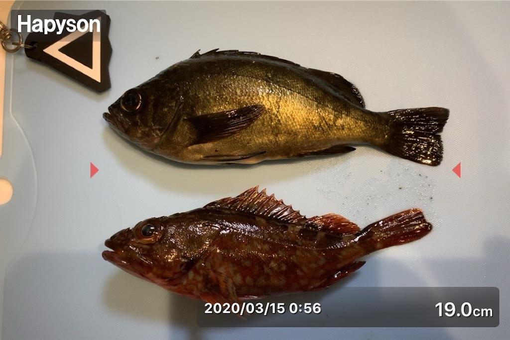 f:id:Kobe_Angler:20200315192123j:image