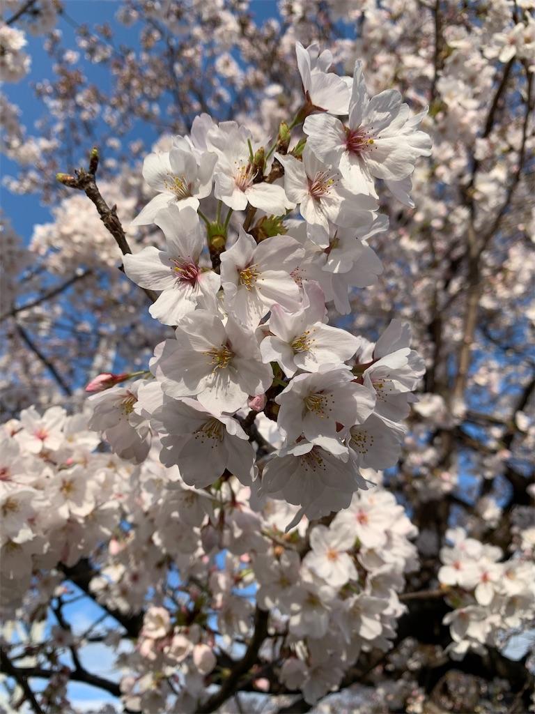 f:id:Kobe_Angler:20200329212119j:image