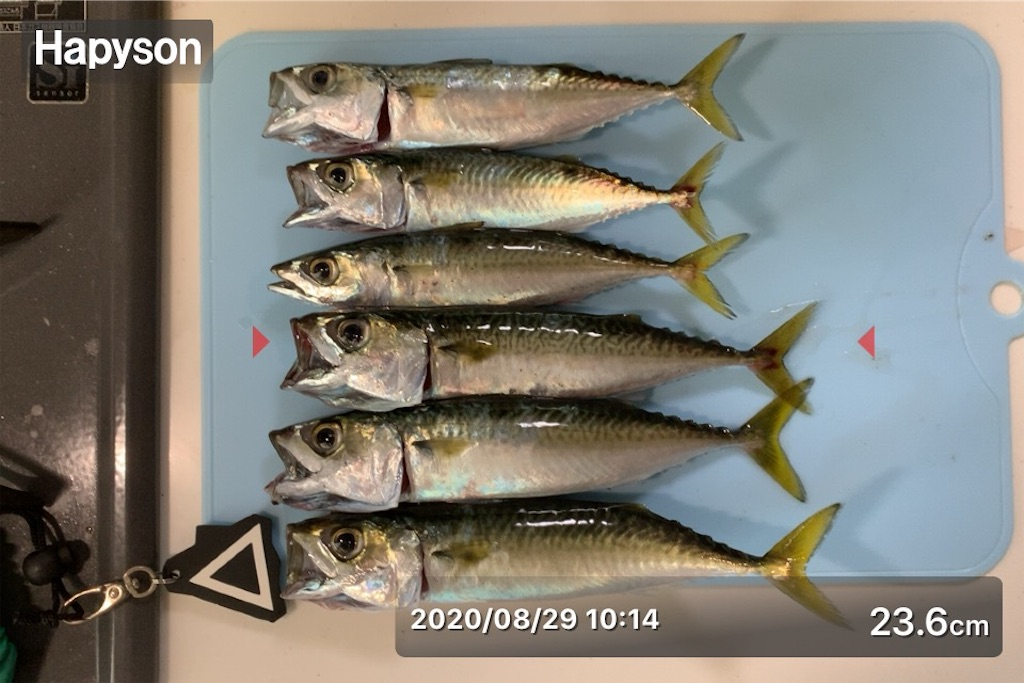 f:id:Kobe_Angler:20200829183551j:image