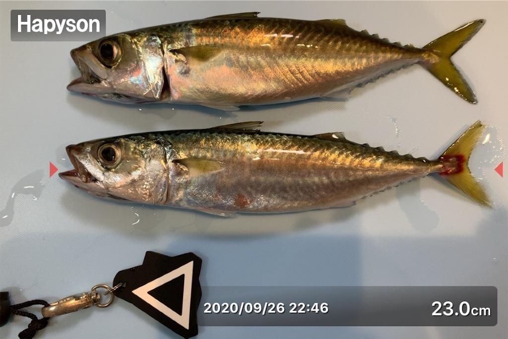 f:id:Kobe_Angler:20200927152445j:image