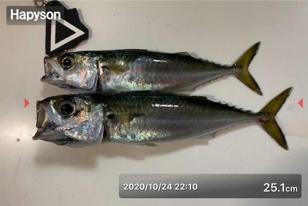 f:id:Kobe_Angler:20201025160734j:image