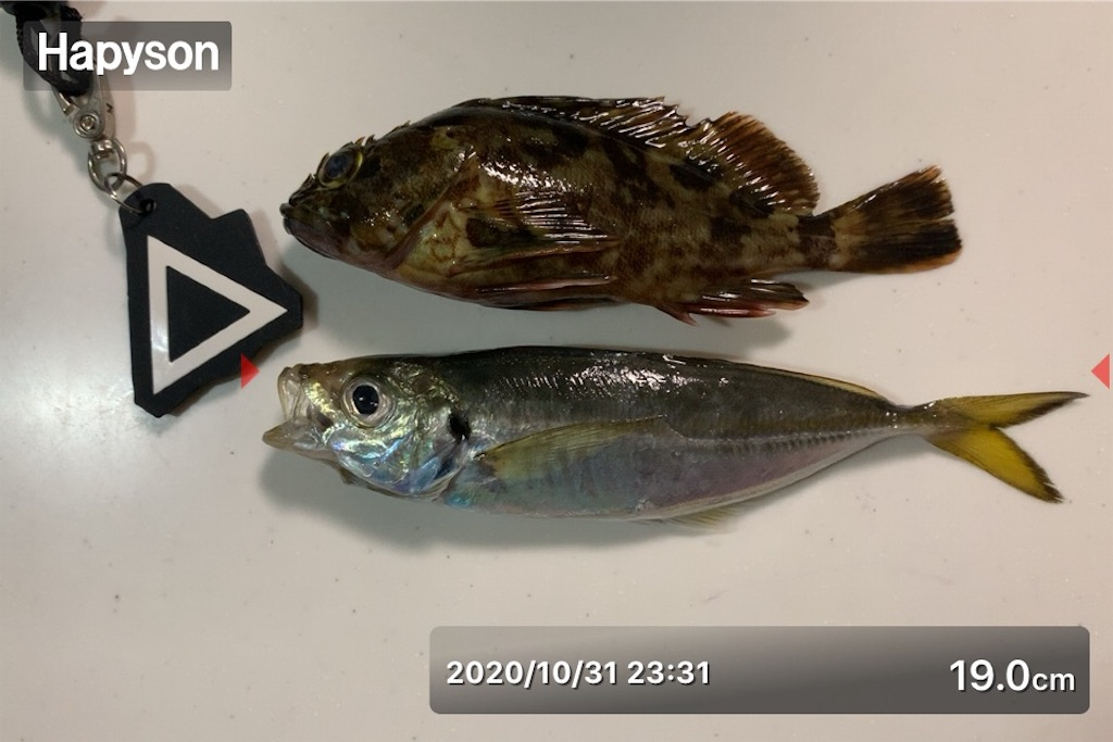 f:id:Kobe_Angler:20201101182020j:image