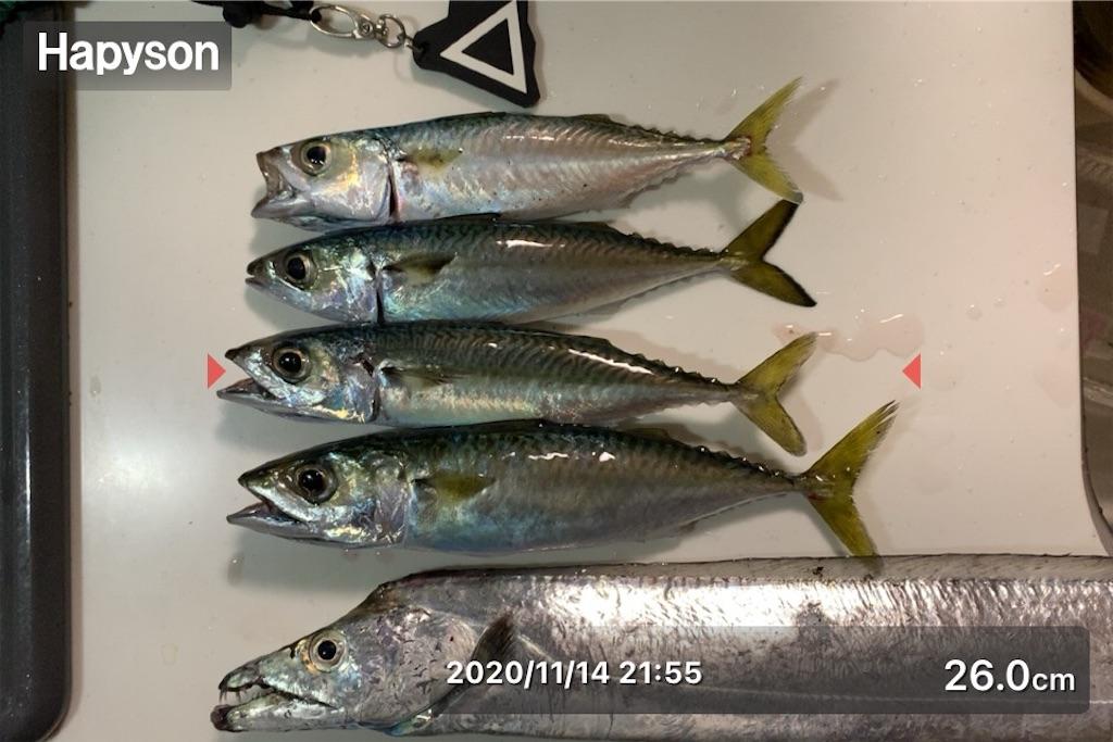 f:id:Kobe_Angler:20201115134818j:image