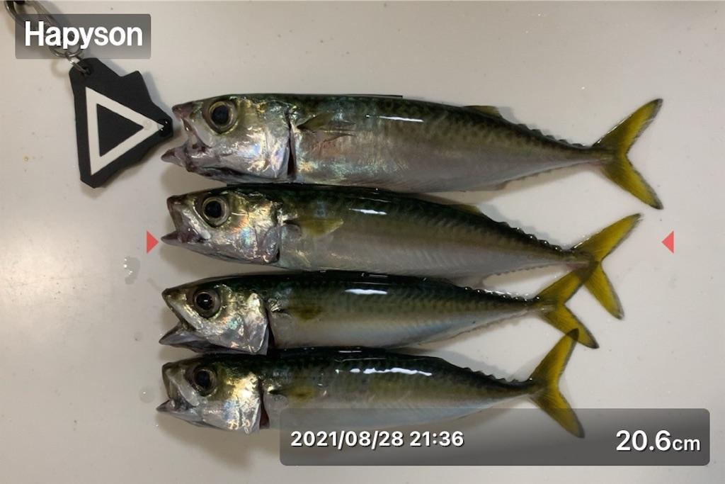 f:id:Kobe_Angler:20210829115315j:image