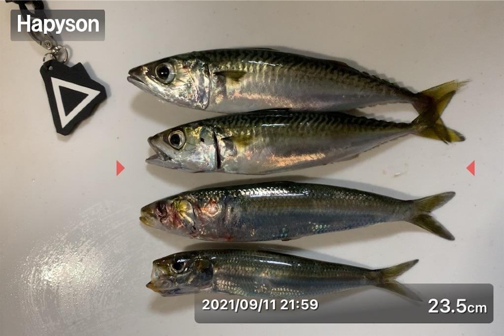 f:id:Kobe_Angler:20210912121310j:image