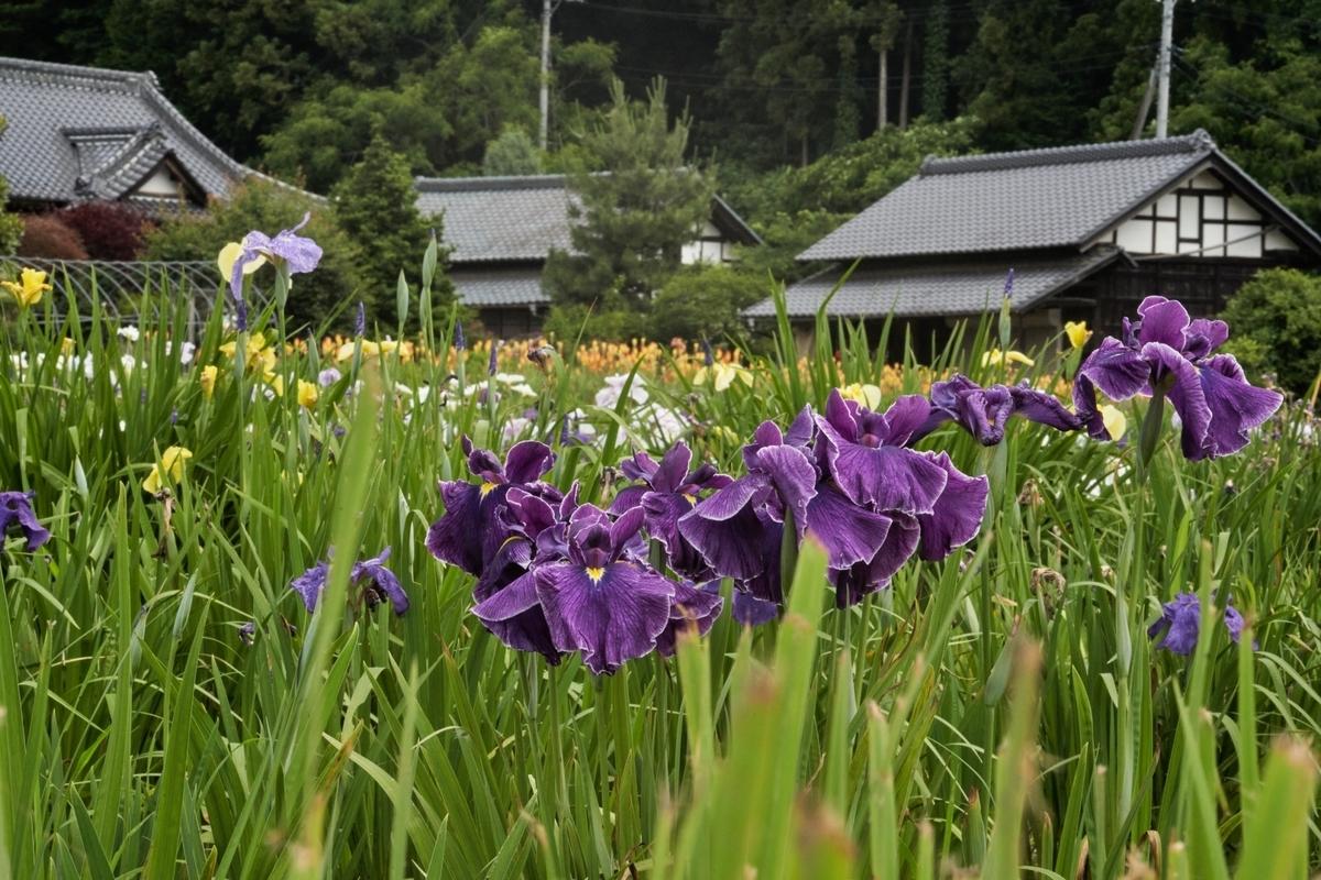 f:id:Komatsuzakiaya:20210614130233j:plain