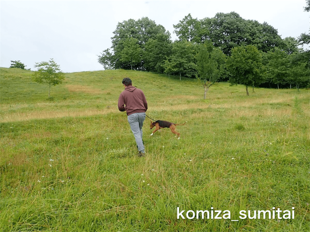 f:id:Komiza_sumitai:20191006213406p:image