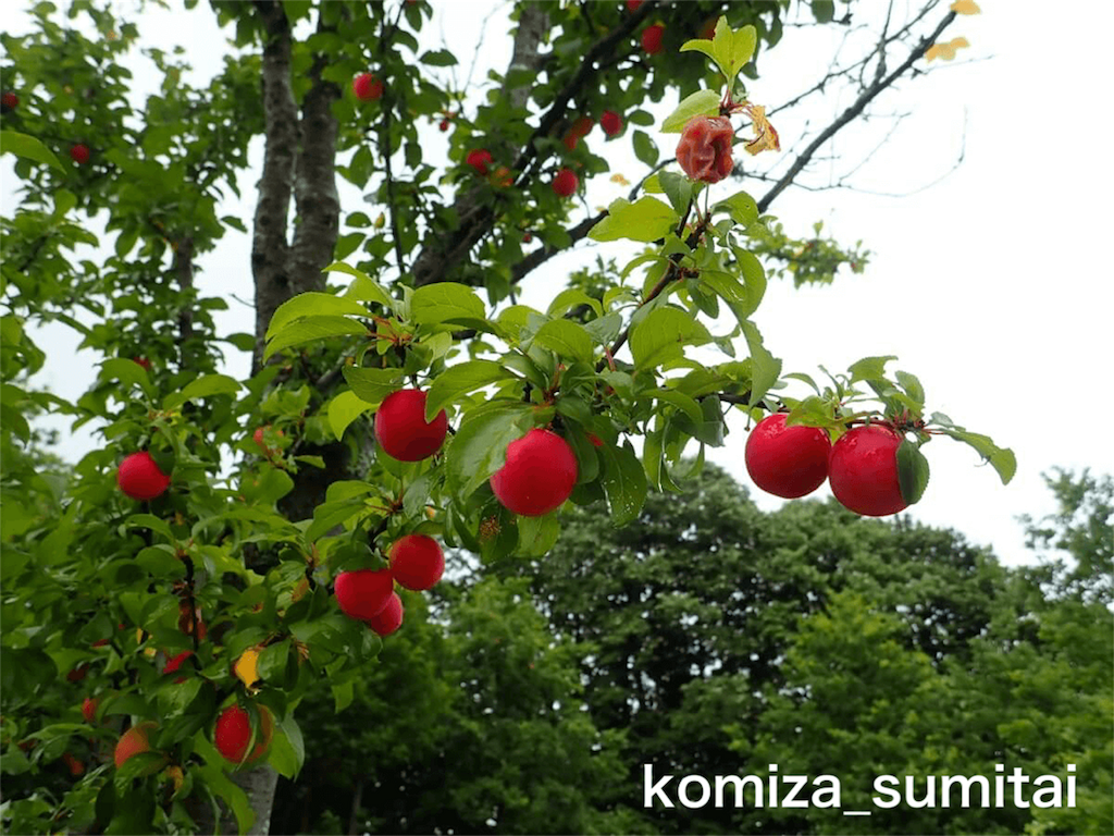 f:id:Komiza_sumitai:20191006213619p:image