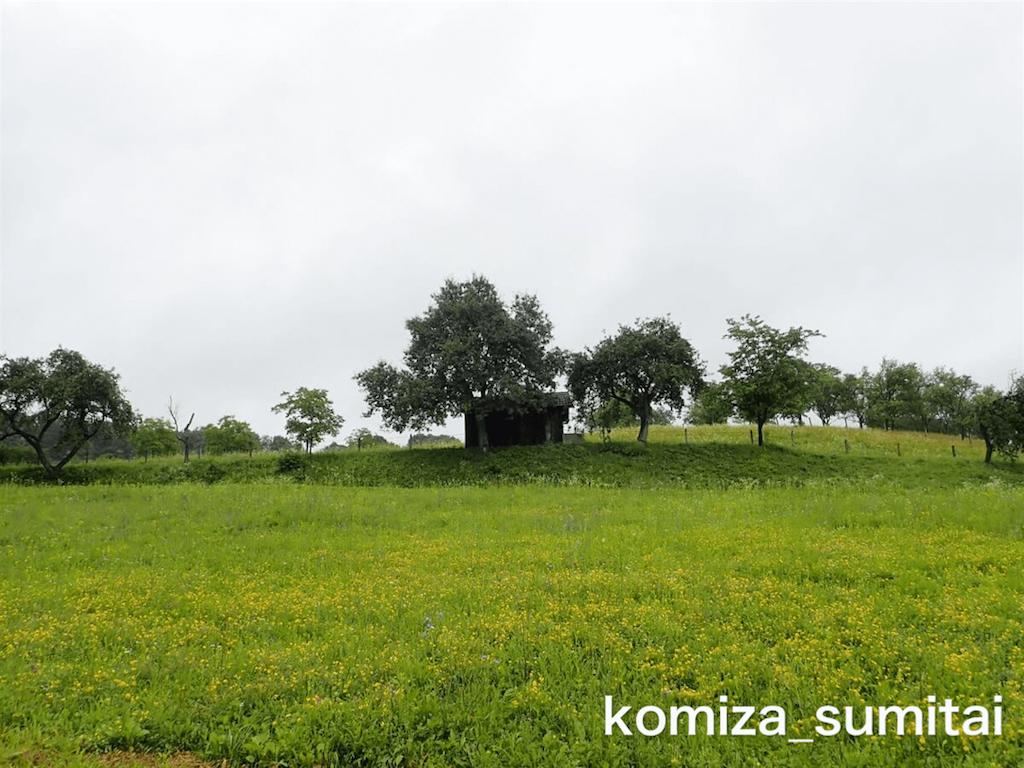 f:id:Komiza_sumitai:20191006213718p:image