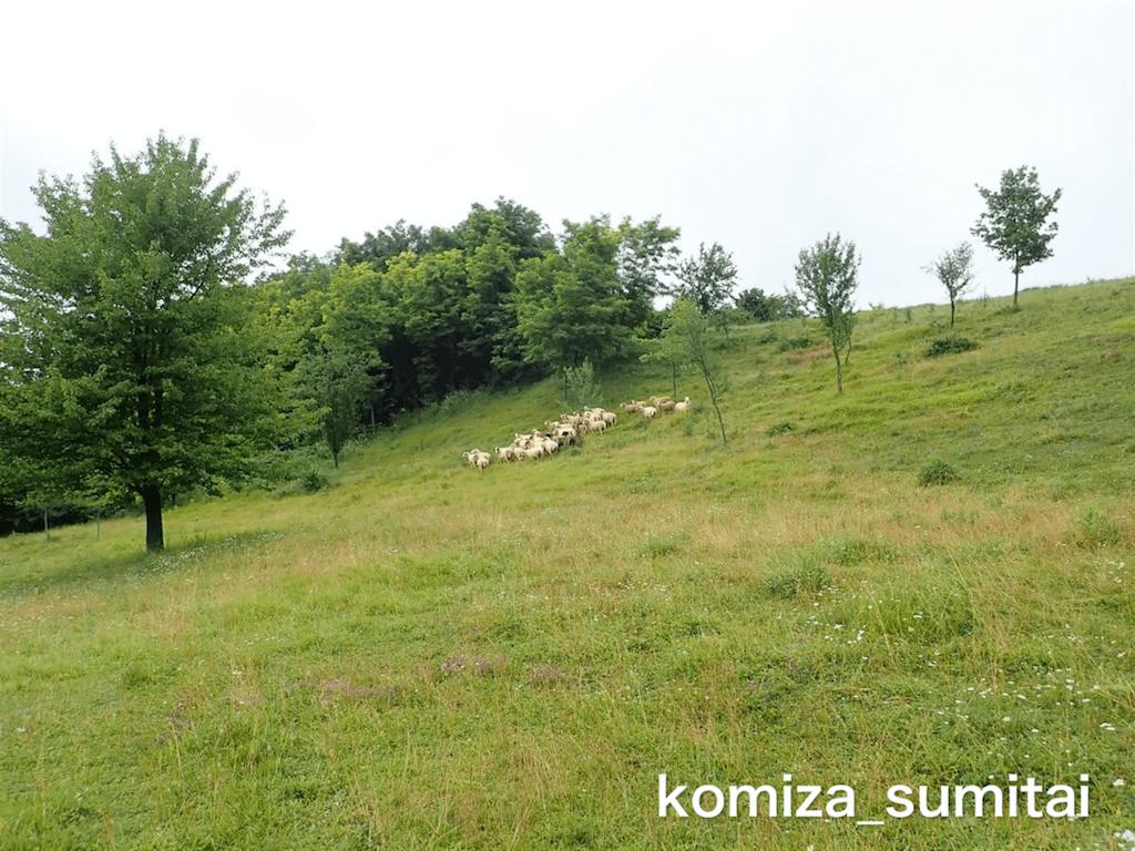f:id:Komiza_sumitai:20191006213843p:image