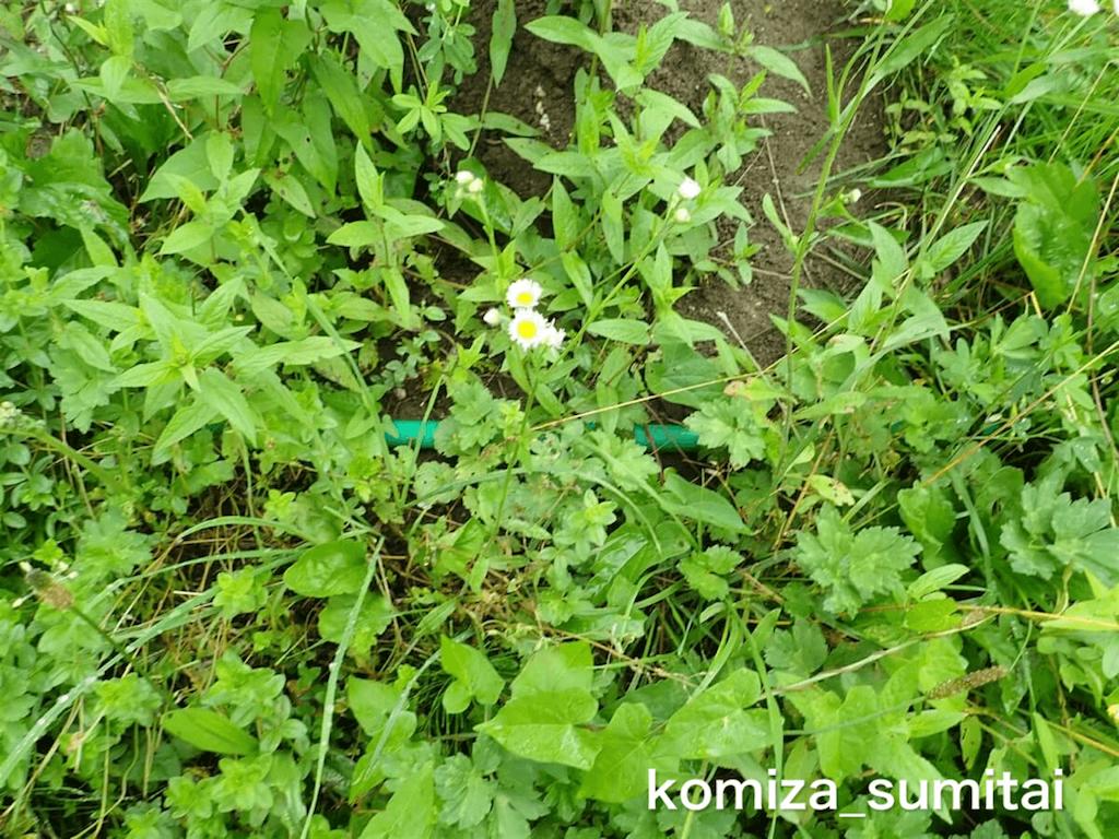 f:id:Komiza_sumitai:20191006213915p:image