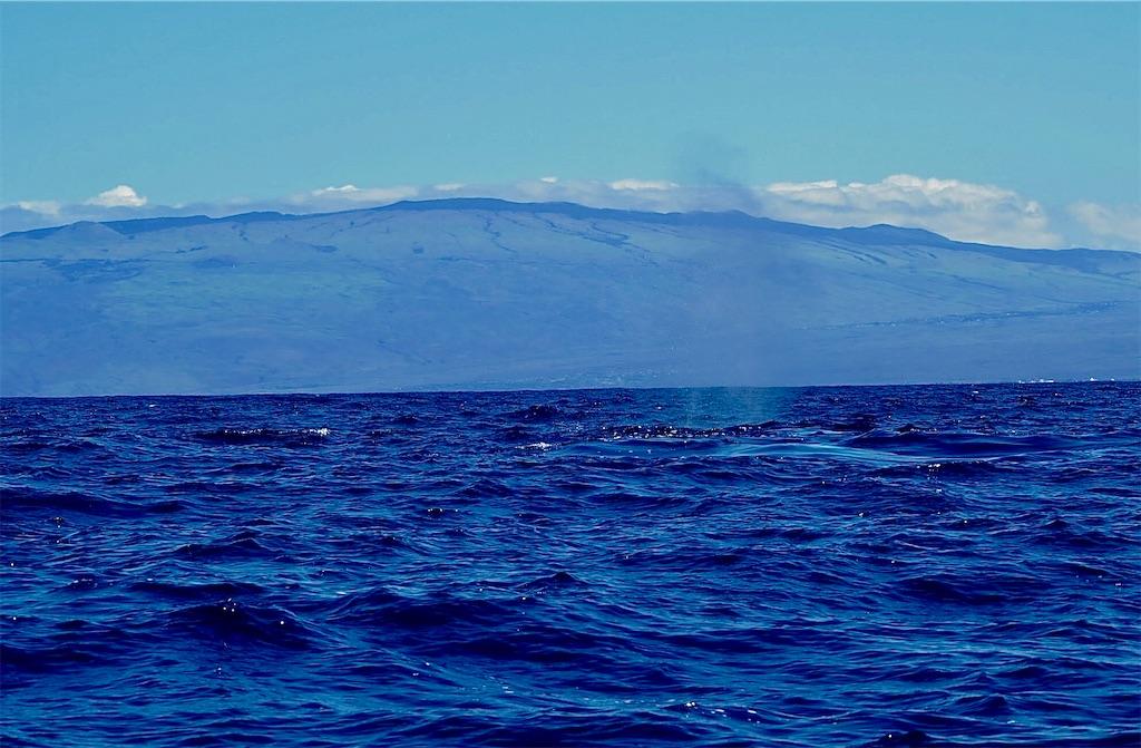 f:id:KonaHawaii:20210211145740j:image