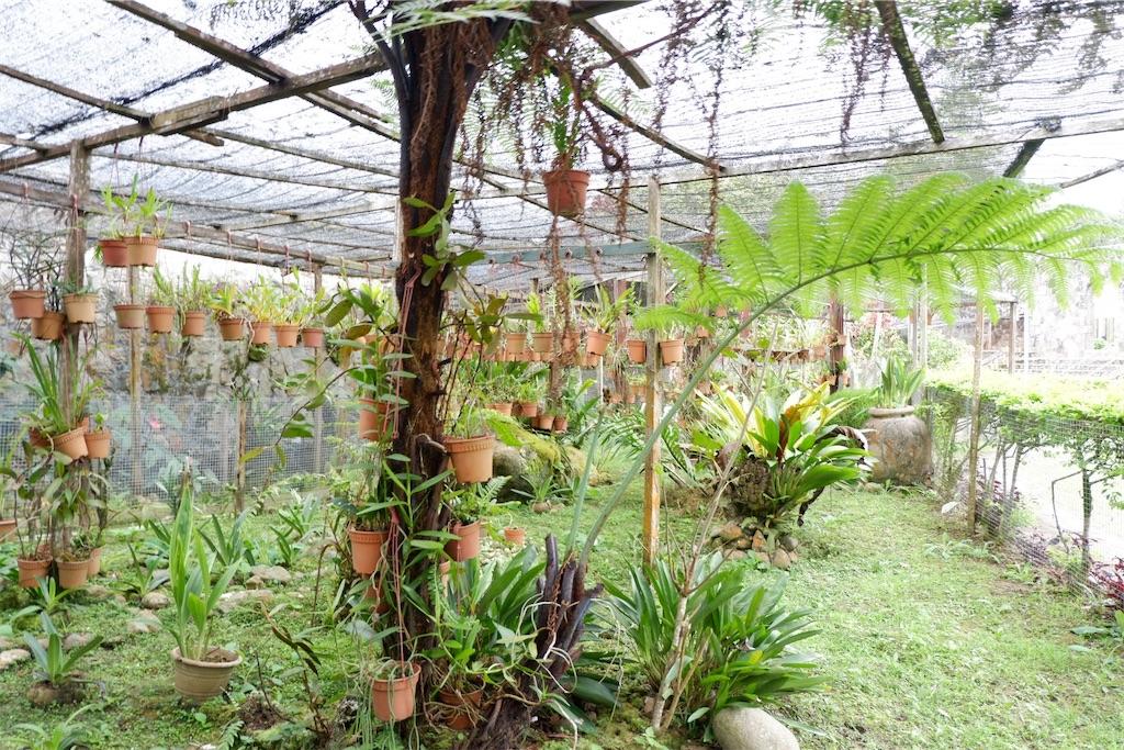 f:id:KotakinabaluAisKacanglife:20200703172621j:image