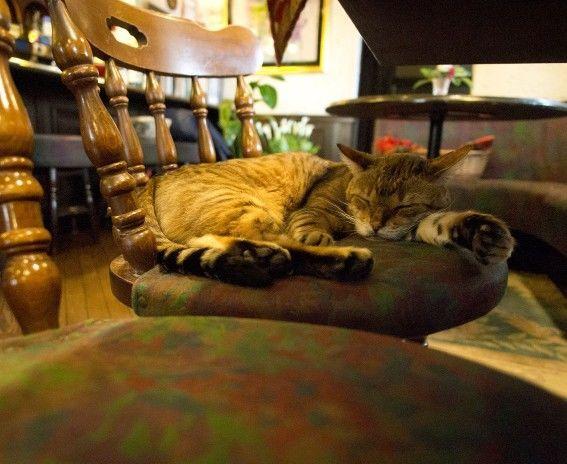 和蘭豆・寝ている看板猫のレオさん
