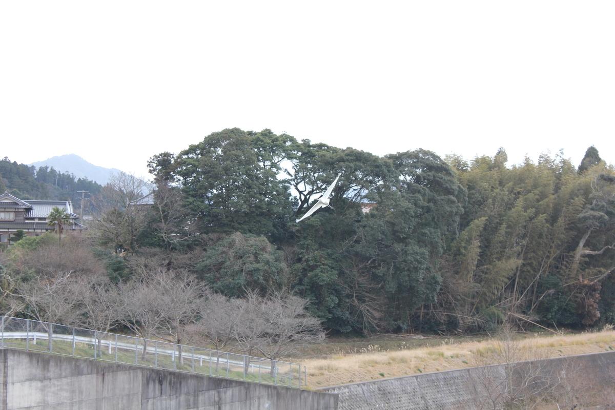 f:id:Ksuke-D:20200614145336j:plain
