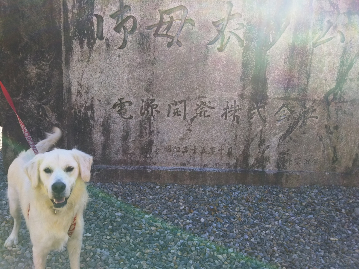 f:id:Ksuke-D:20210620114758j:plain