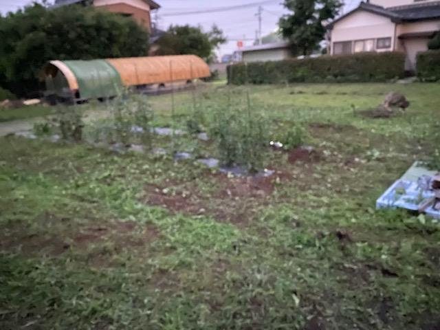 f:id:Kumahachi:20200626224000j:plain