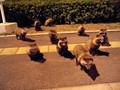 長崎空港狸