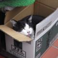 箱入りの猫