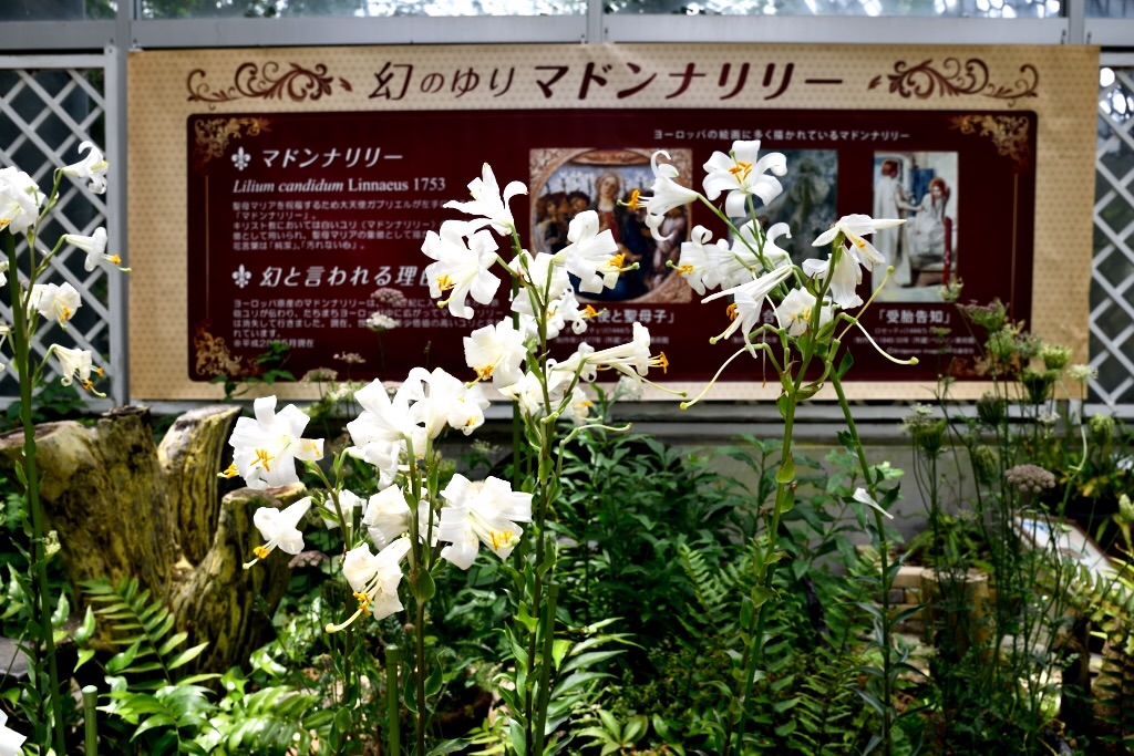 f:id:Kuniofukudaicloudcom:20170620200850j:image