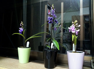 Ranyuen's Mini-mini-orchids (Ponerorchis)