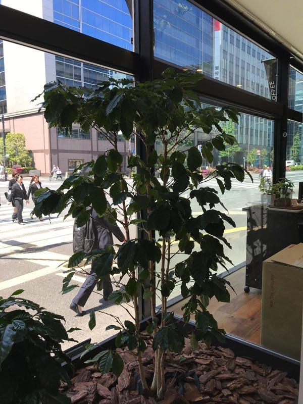 UCC kurochamame kurotyamame Coffee Tree くろちゃまめ くろちゃまめ本舗 kurochamame kurotyamame 珈琲 コーヒー coffee 焙煎 ドリップバッグ