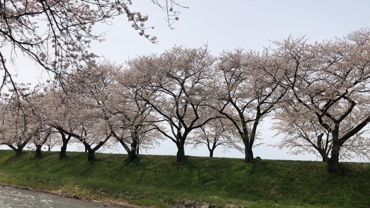 f:id:Kuunyan_takashi:20200416160526j:plain