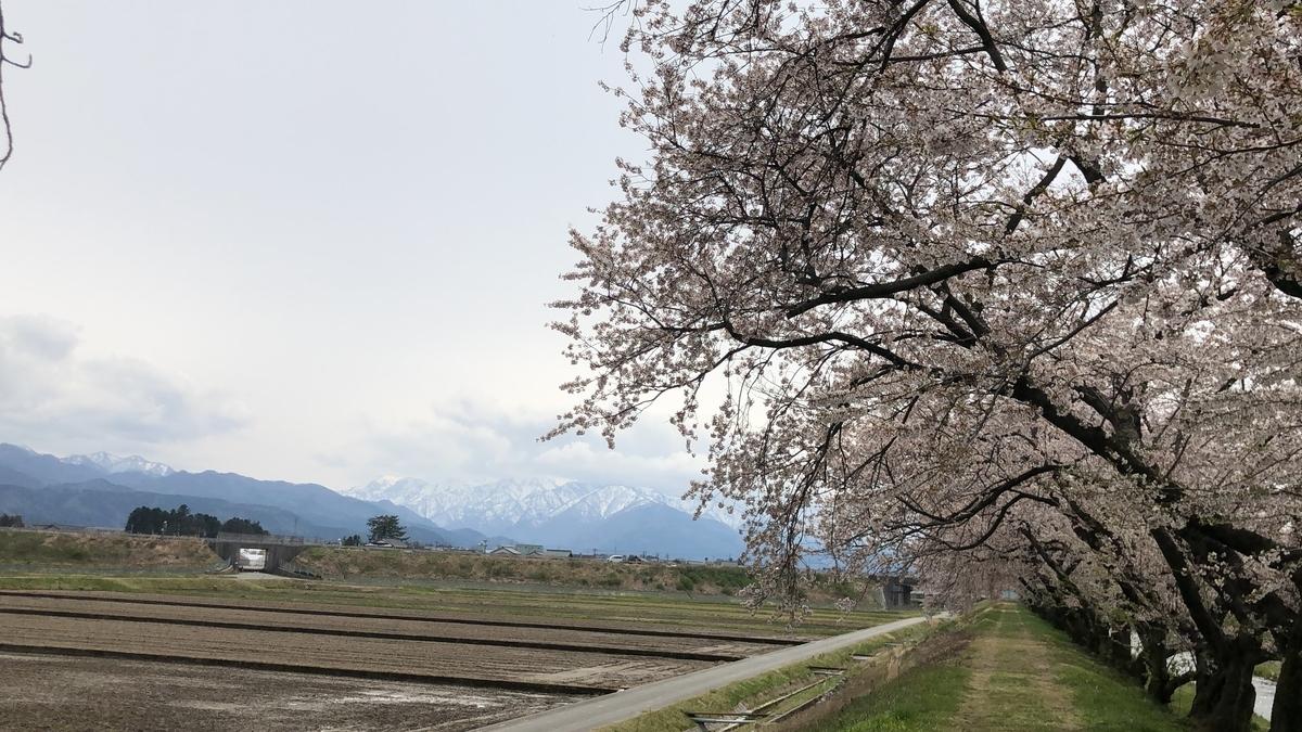 f:id:Kuunyan_takashi:20200416160553j:plain