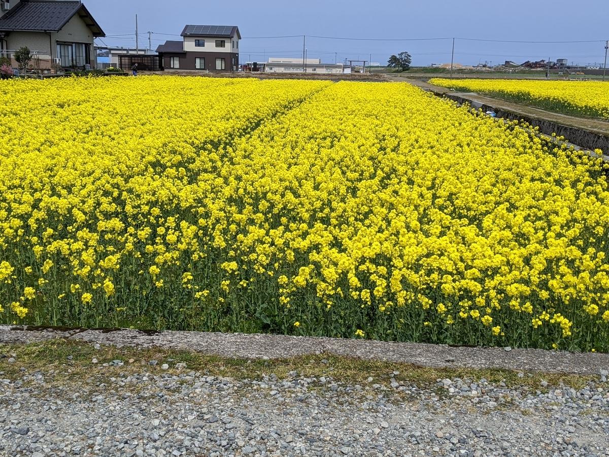 f:id:Kuunyan_takashi:20200416160620j:plain