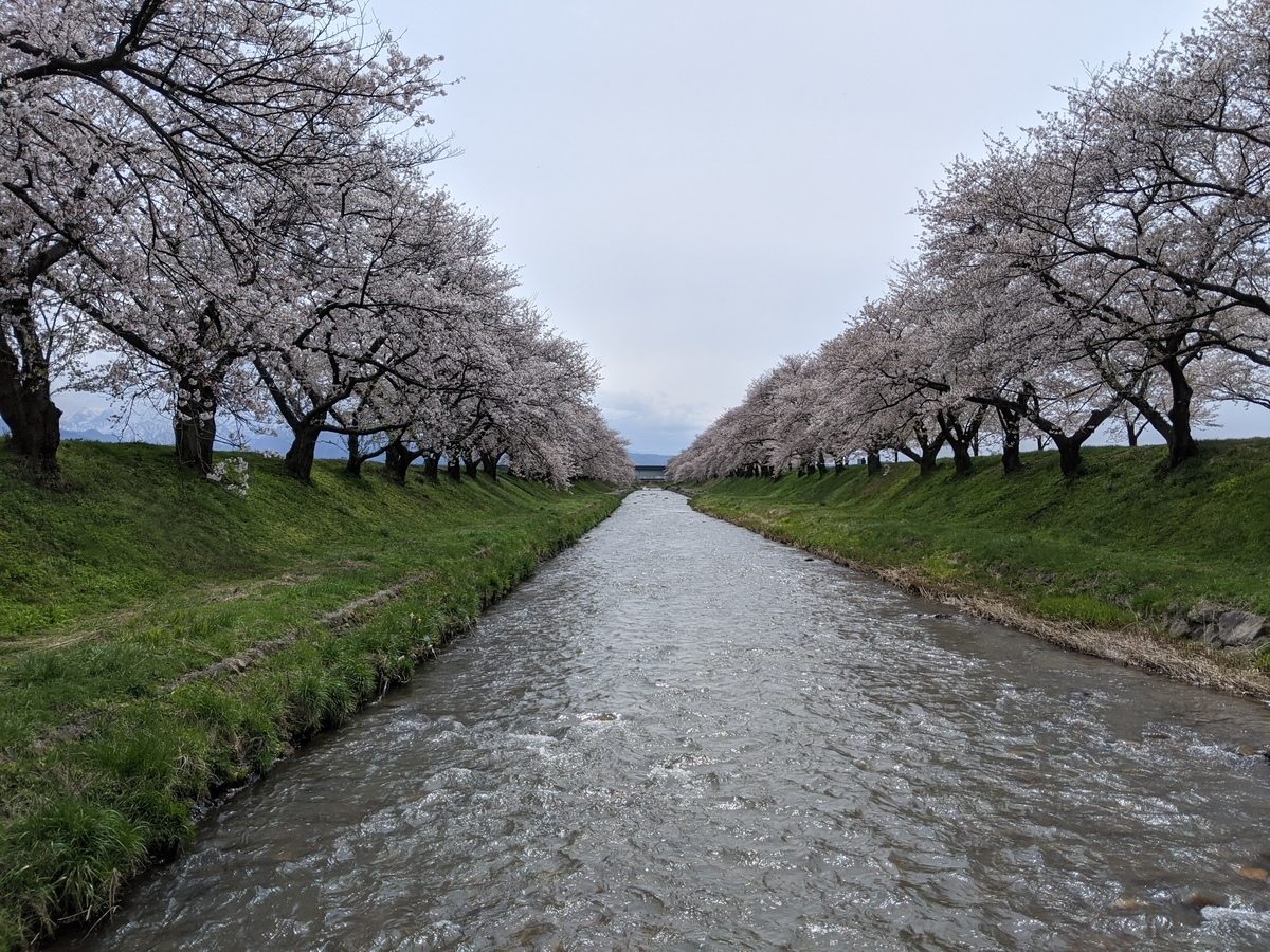 f:id:Kuunyan_takashi:20200416160807j:plain
