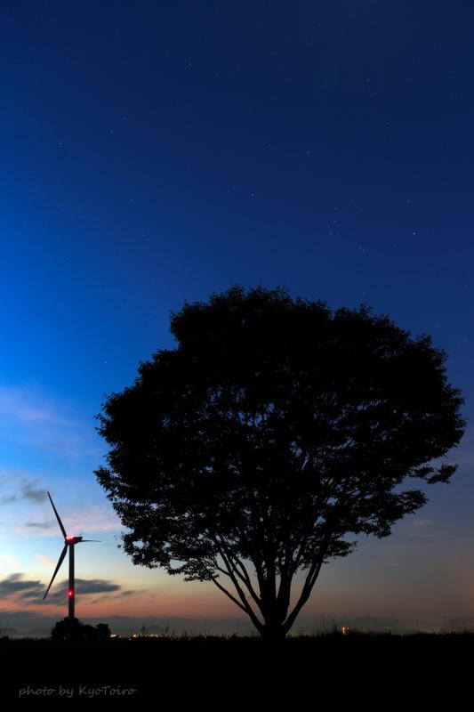 京都新聞写真コンテスト 風車と気になる木@琵琶湖