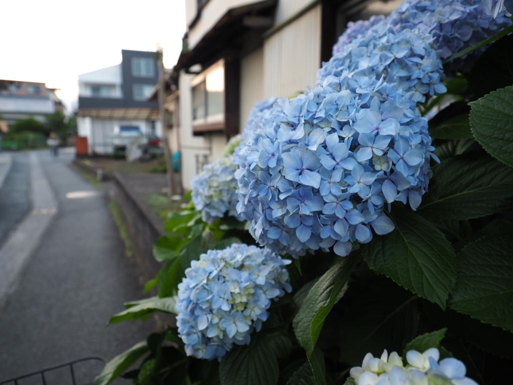 f:id:Kyo_Ichikawa:20160615204158j:plain