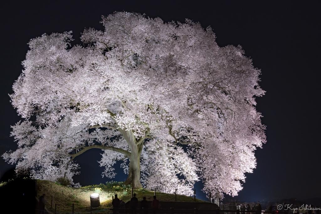 f:id:Kyo_Ichikawa:20181210135335j:plain