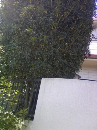 f:id:KyojiOhno:20081002115831j:image