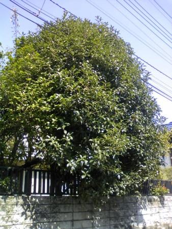 f:id:KyojiOhno:20081002121028j:image