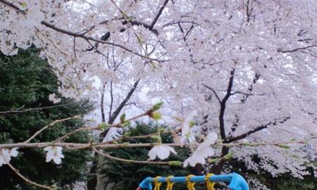 f:id:KyojiOhno:20110409134342j:image